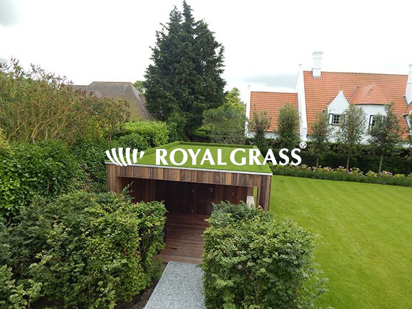 Project: Groendak te Knokke met Royal Grass Sense