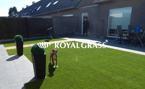 Project: Tuin te Heule met Royal Grass Satin