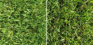 Royal Grass® Sense kunstgras